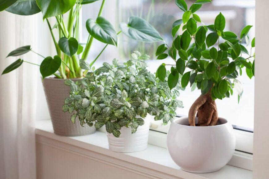 Planta mozaic, cea mai frumoasă decorațiune interioară