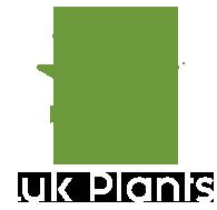 LUK PLANTS - Plante suculente pentru Casa si Gradina