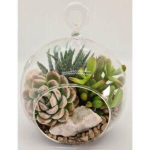 terariu cu plante succulente